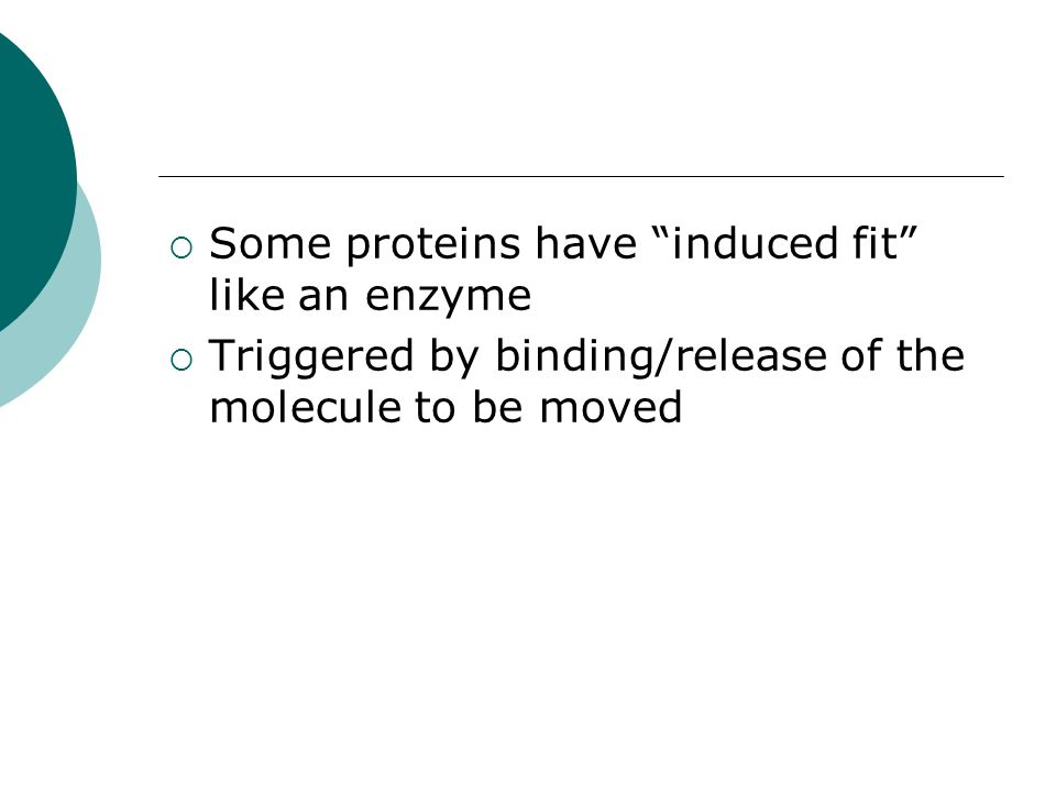 Some proteins have induced fit like an enzyme