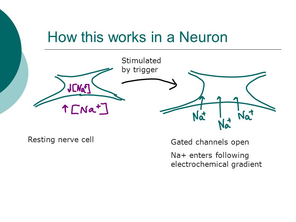 How this works in a Neuron