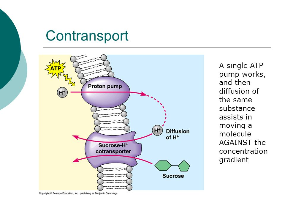 ContransportA single ATP pump works, and then diffusion of the same substance assists in moving a molecule AGAINST the concentration gradient.