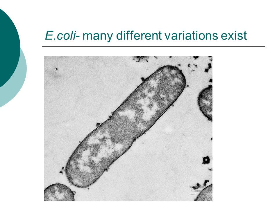 E.coli- many different variations exist