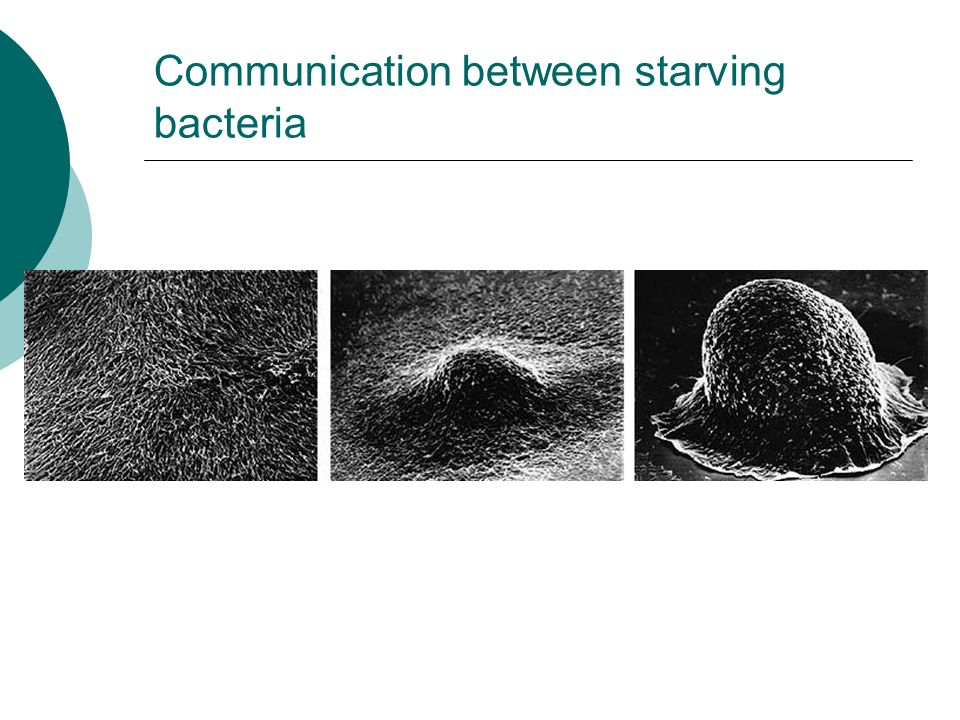 Communication between starving bacteria