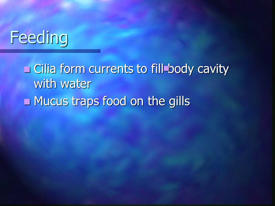 Feeding Cilia form currents to fill body cavity with water
