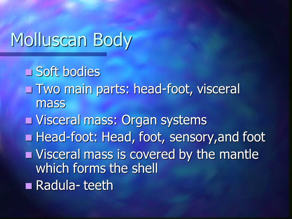 Molluscan Body Soft bodies Two main parts: head-foot, visceral mass