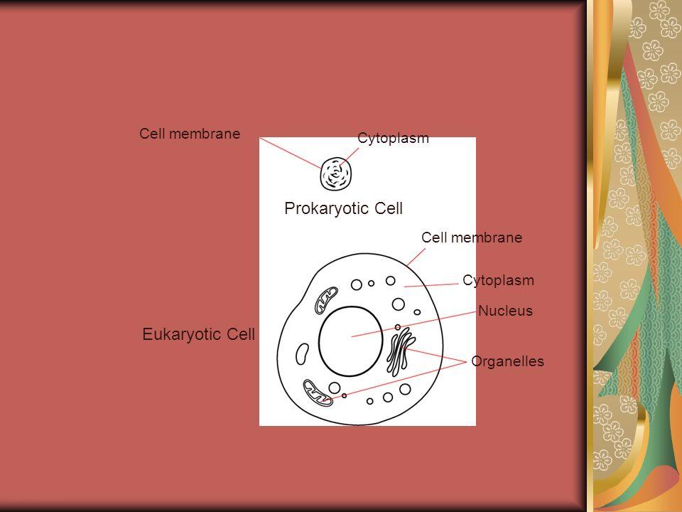 Prokaryotic Cell Eukaryotic Cell Cell membrane Cytoplasm Nucleus