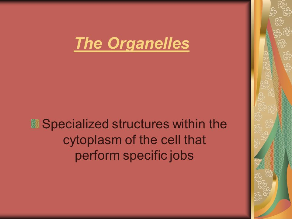 The Organelles Specialized structures within the cytoplasm of the cell that perform specific jobs