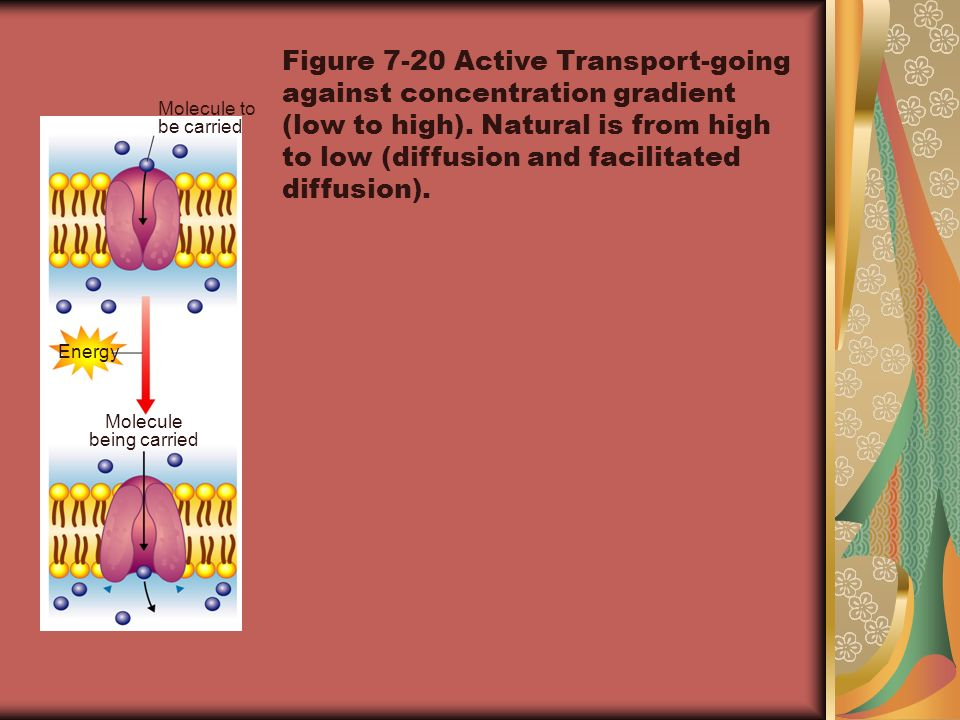 Figure 7-20 Active Transport-going against concentration gradient (low to high). Natural is from high to low (diffusion and facilitated diffusion).