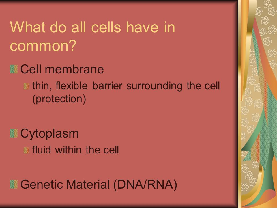 What do all cells have in common