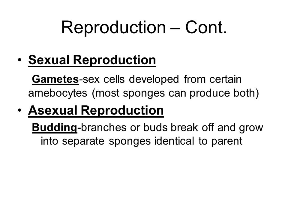 Reproduction – Cont. Sexual Reproduction
