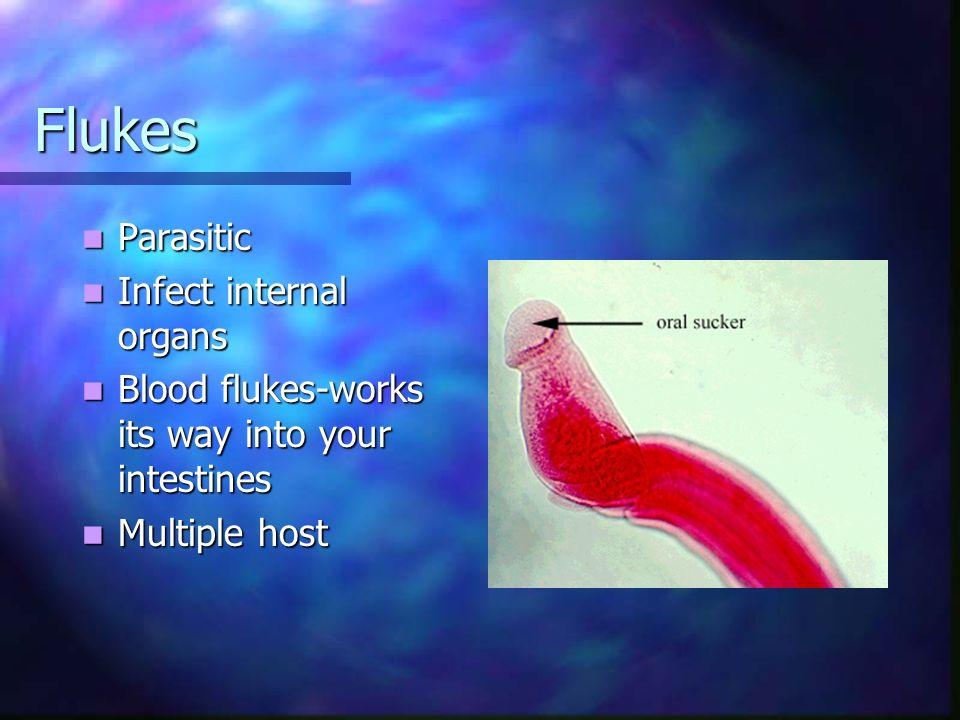Flukes Parasitic Infect internal organs