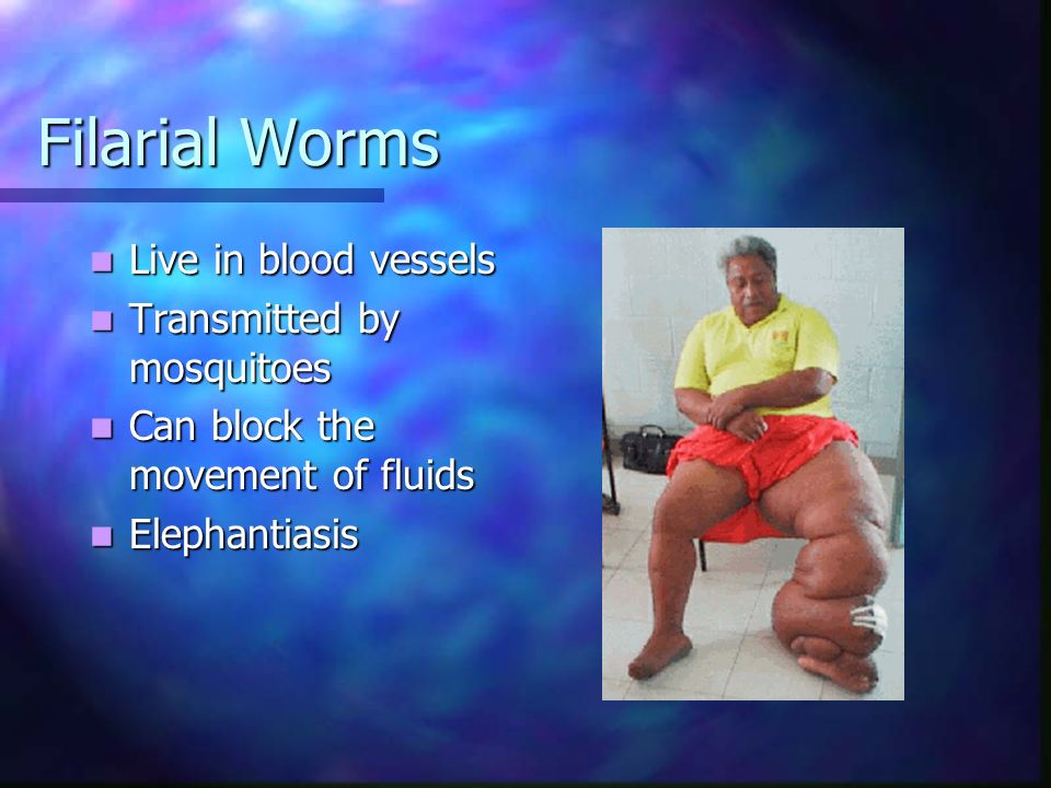 Filarial Worms Live in blood vessels Transmitted by mosquitoes