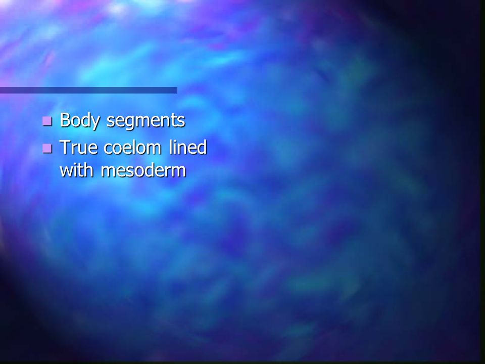 Body segments True coelom lined with mesoderm