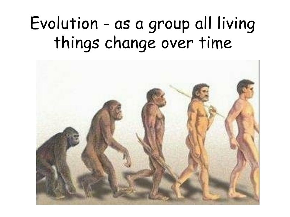 Evolution - as a group all living things change over time