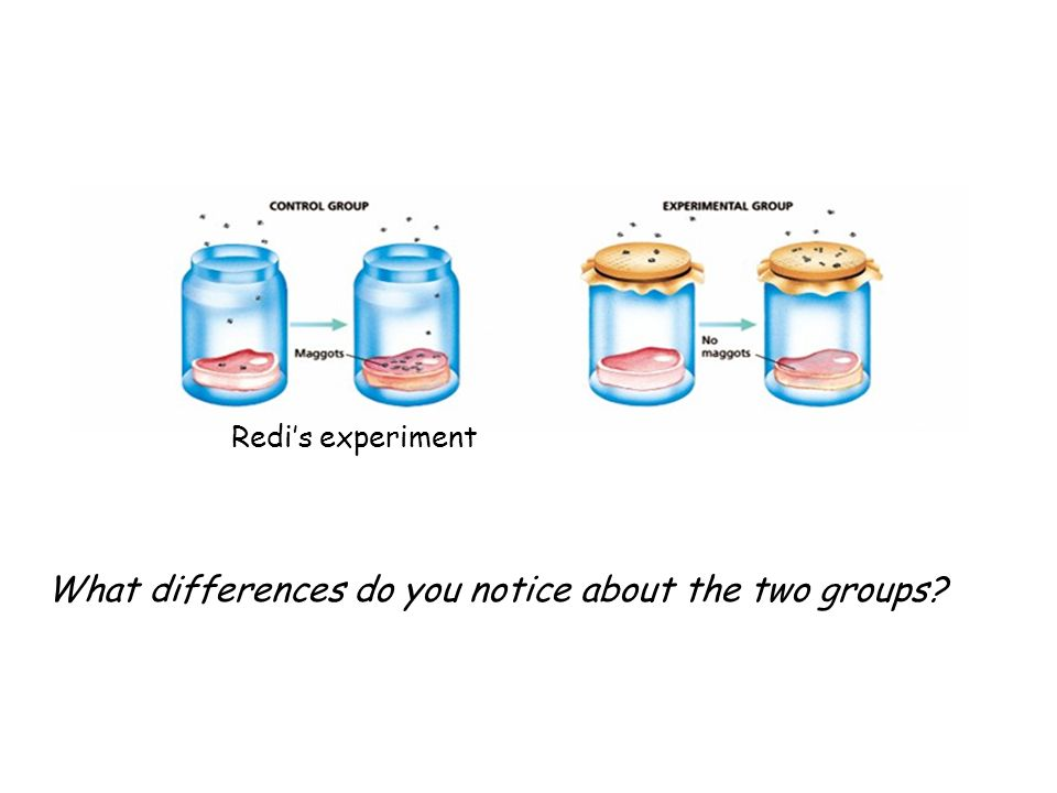 What differences do you notice about the two groups