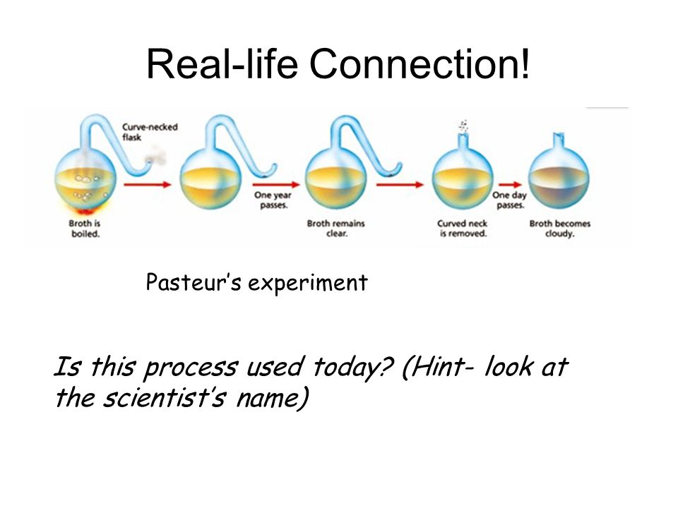 Real-life Connection. Pasteur's experiment. Is this process used today.