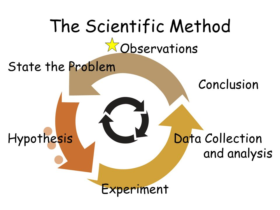 The Scientific Method Observations State the Problem Conclusion