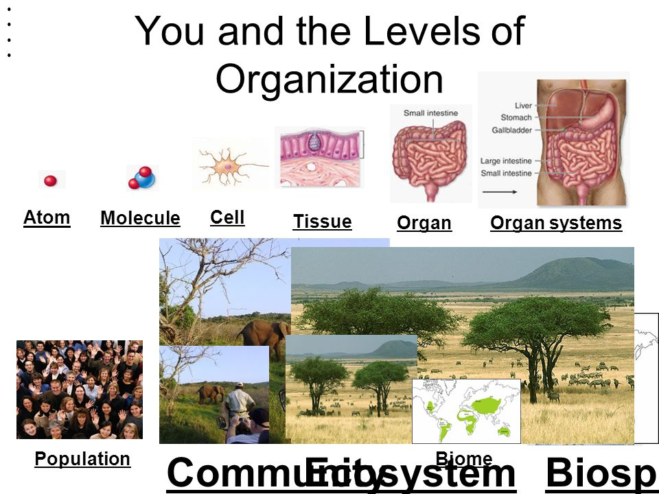 You and the Levels of Organization