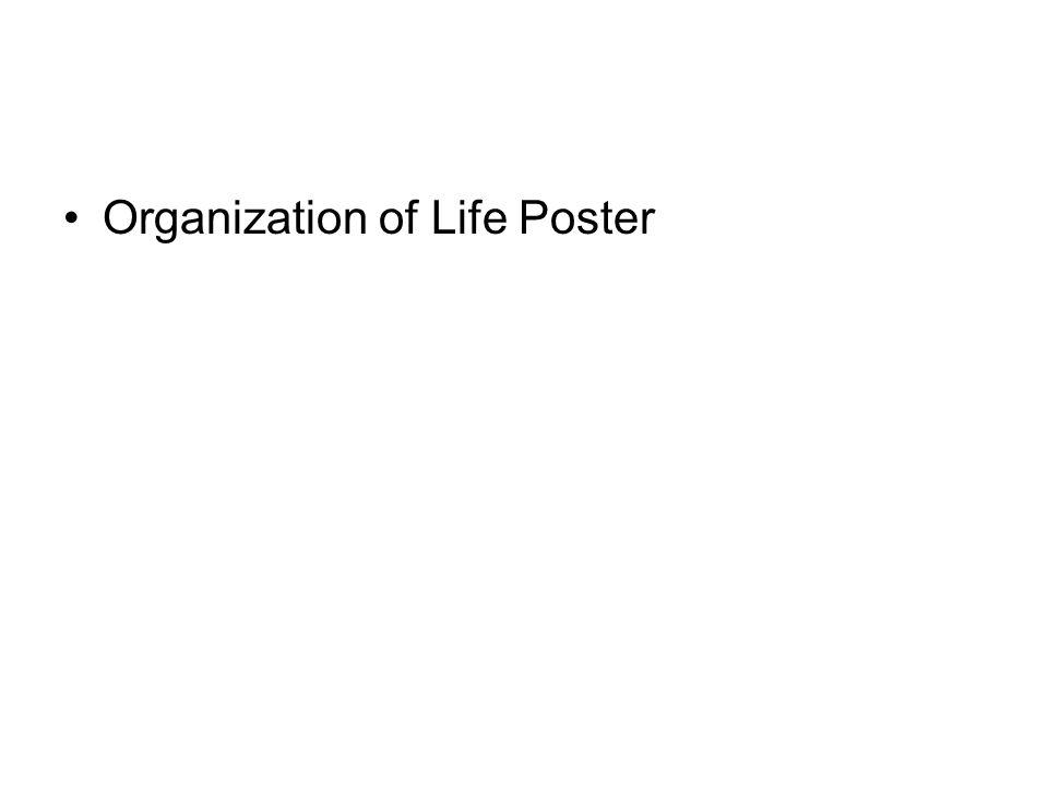 Organization of Life Poster