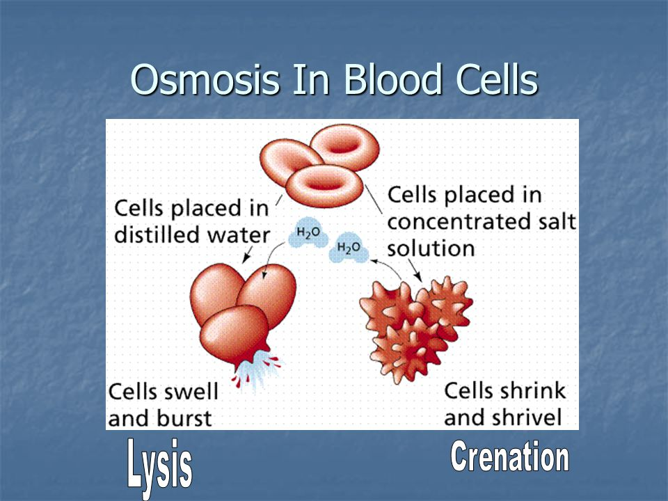 Osmosis In Blood Cells Lysis Crenation
