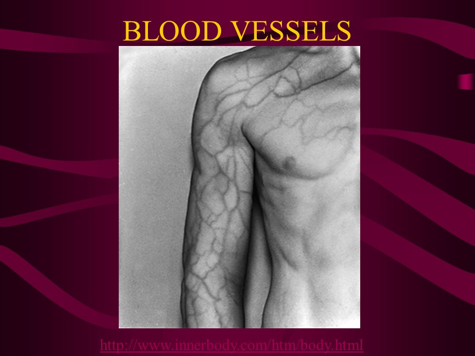 BLOOD VESSELS http://www.innerbody.com/htm/body.html