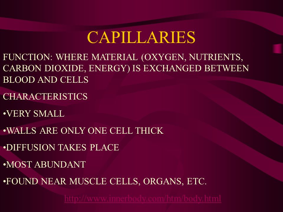 CAPILLARIES FUNCTION: WHERE MATERIAL (OXYGEN, NUTRIENTS, CARBON DIOXIDE, ENERGY) IS EXCHANGED BETWEEN BLOOD AND CELLS.