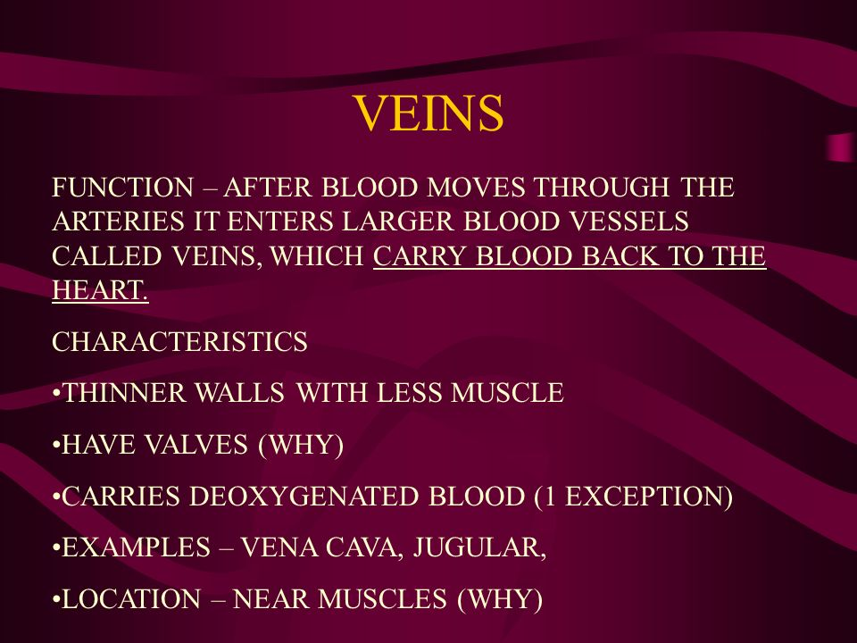 VEINS FUNCTION – AFTER BLOOD MOVES THROUGH THE ARTERIES IT ENTERS LARGER BLOOD VESSELS CALLED VEINS, WHICH CARRY BLOOD BACK TO THE HEART.