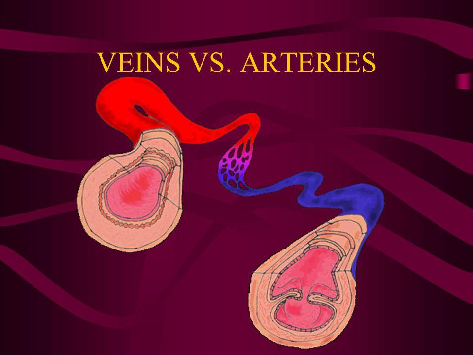 VEINS VS. ARTERIES