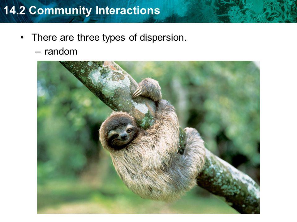 There are three types of dispersion.