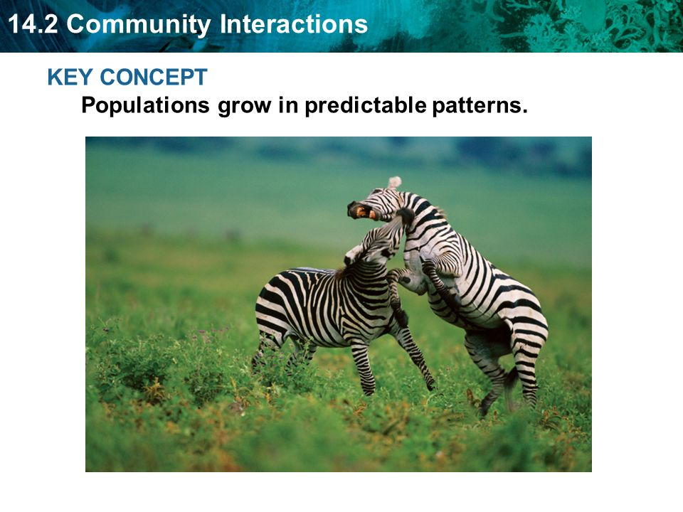 KEY CONCEPT Populations grow in predictable patterns.