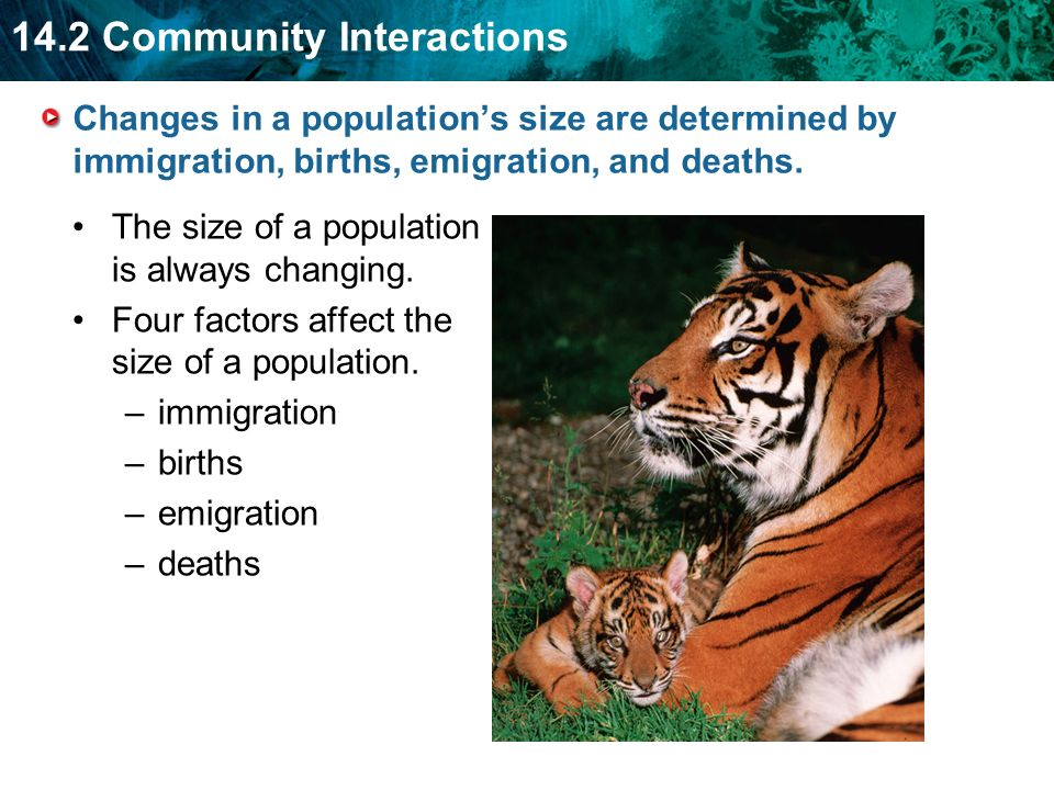 Changes in a population's size are determined by immigration, births, emigration, and deaths.