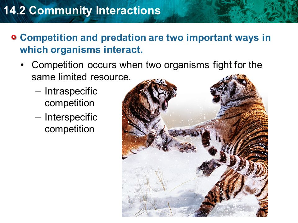 Competition and predation are two important ways in which organisms interact.