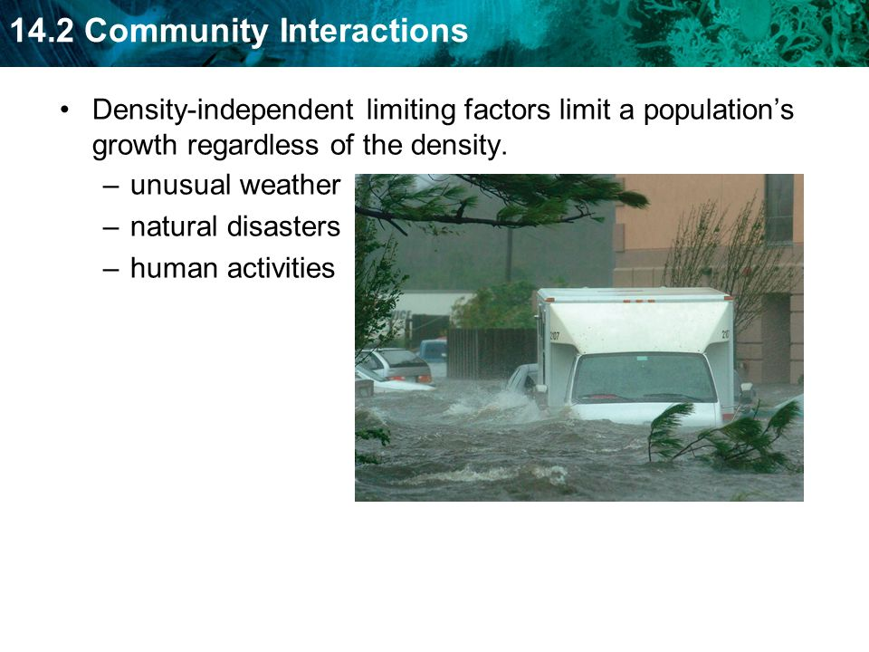 Density-independent limiting factors limit a population's growth regardless of the density.