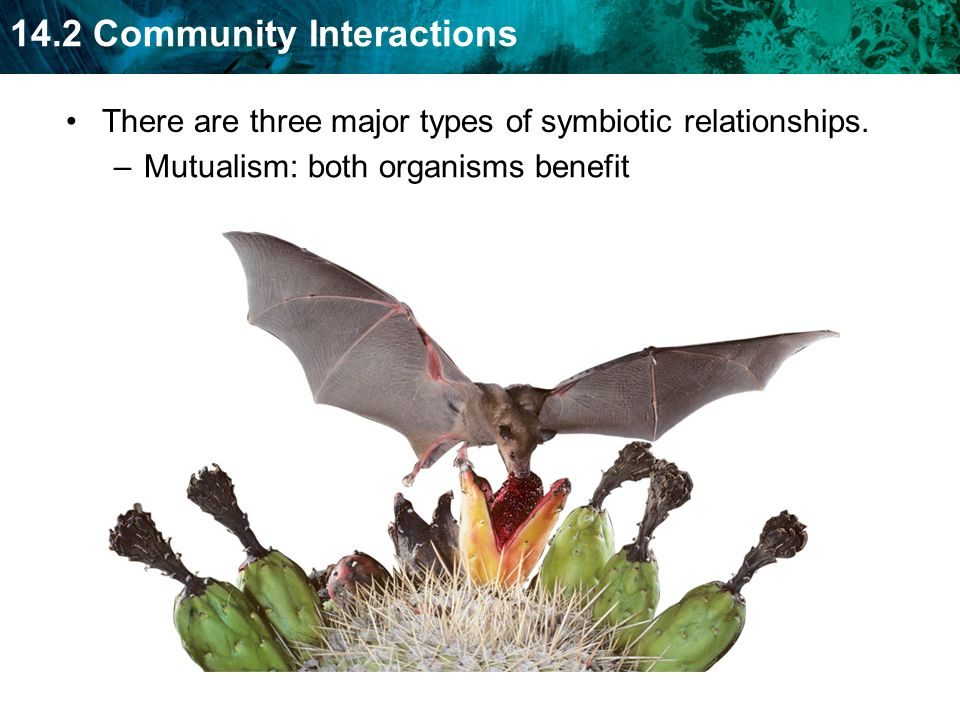 There are three major types of symbiotic relationships.