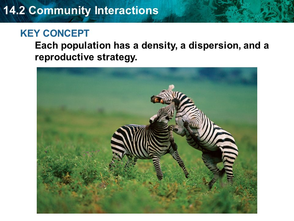 KEY CONCEPT Each population has a density, a dispersion, and a reproductive strategy.