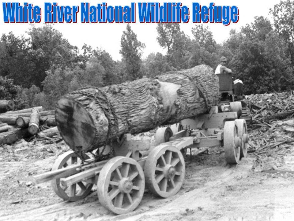 White River National Wildlife Refuge