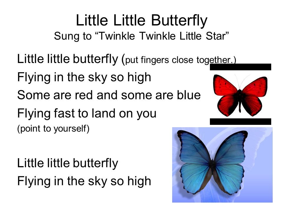 Little Little Butterfly Sung to Twinkle Twinkle Little Star