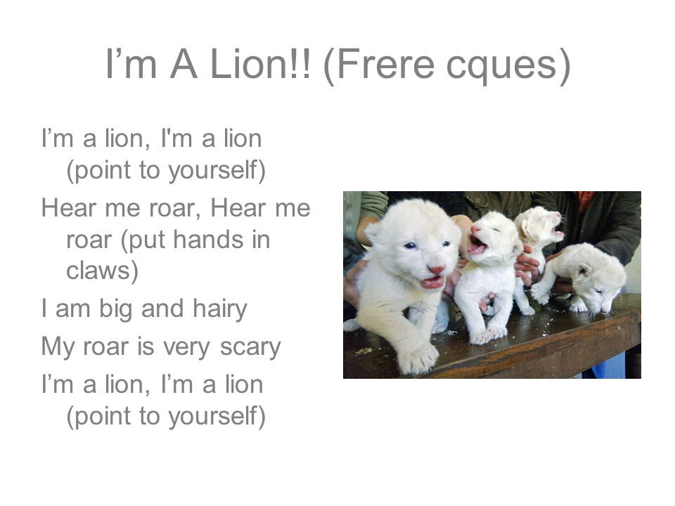 I'm A Lion!! (Frere cques)