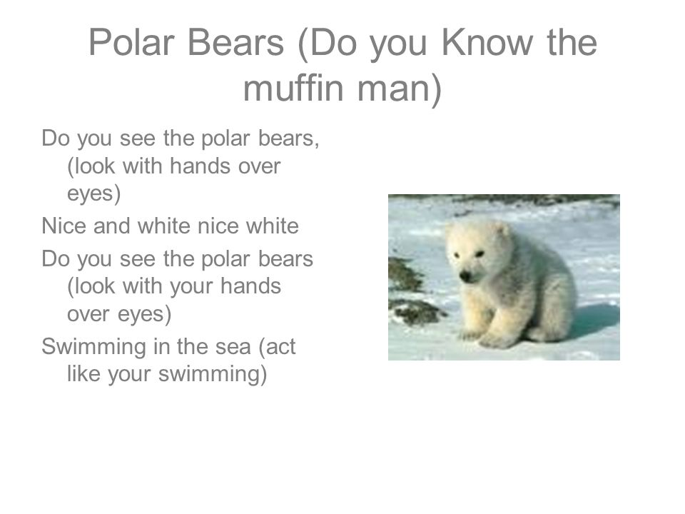 Polar Bears (Do you Know the muffin man)