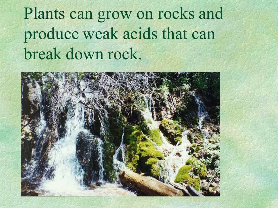 Plants can grow on rocks and produce weak acids that can break down rock.
