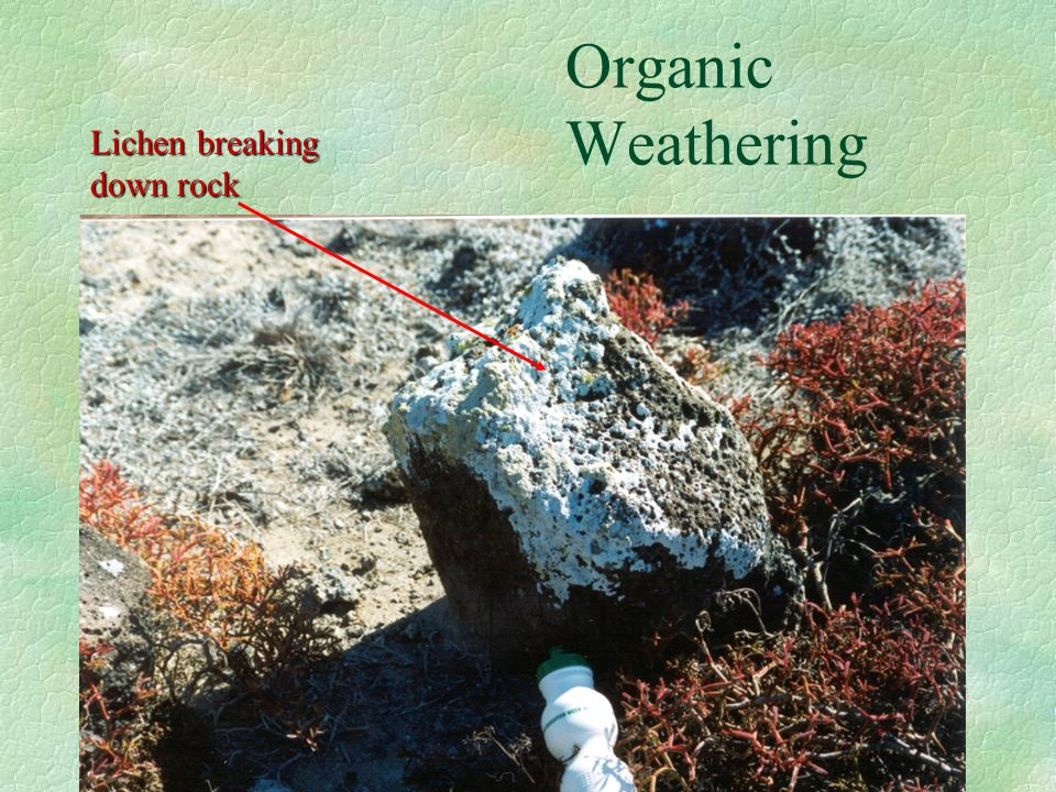Organic Weathering Lichen breaking down rock
