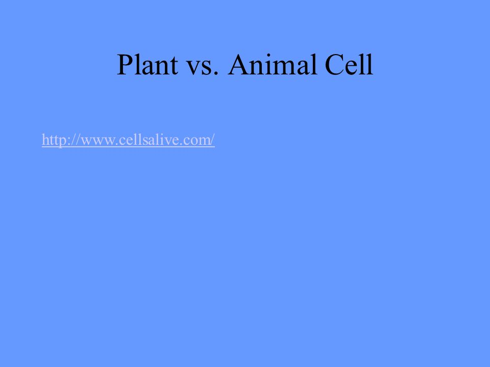 Plant vs. Animal Cell
