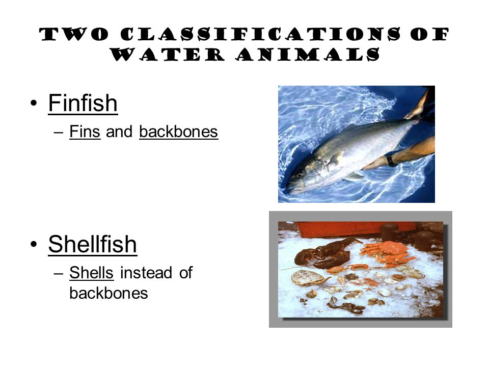 TWO CLASSIFICATIONS OF WATER ANIMALS