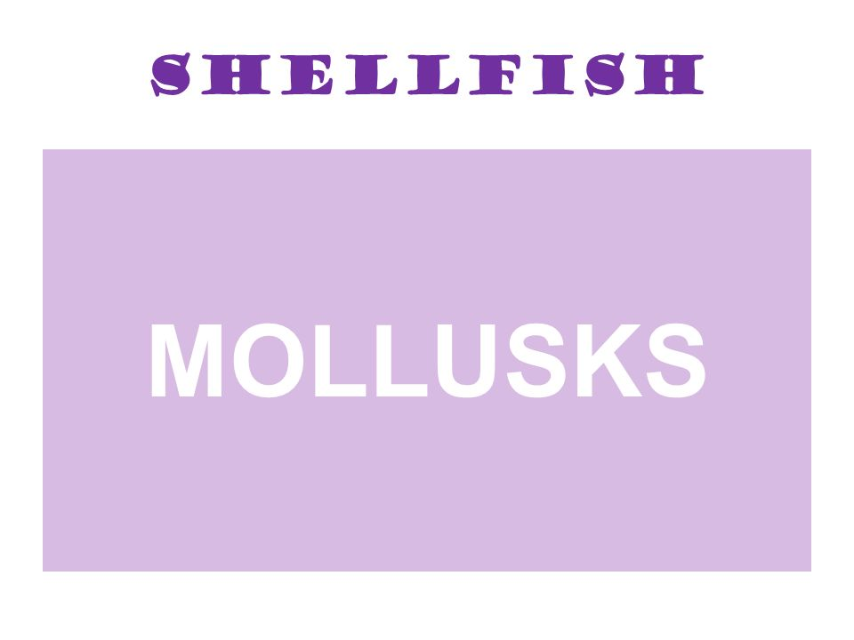 Shellfish MOLLUSKS