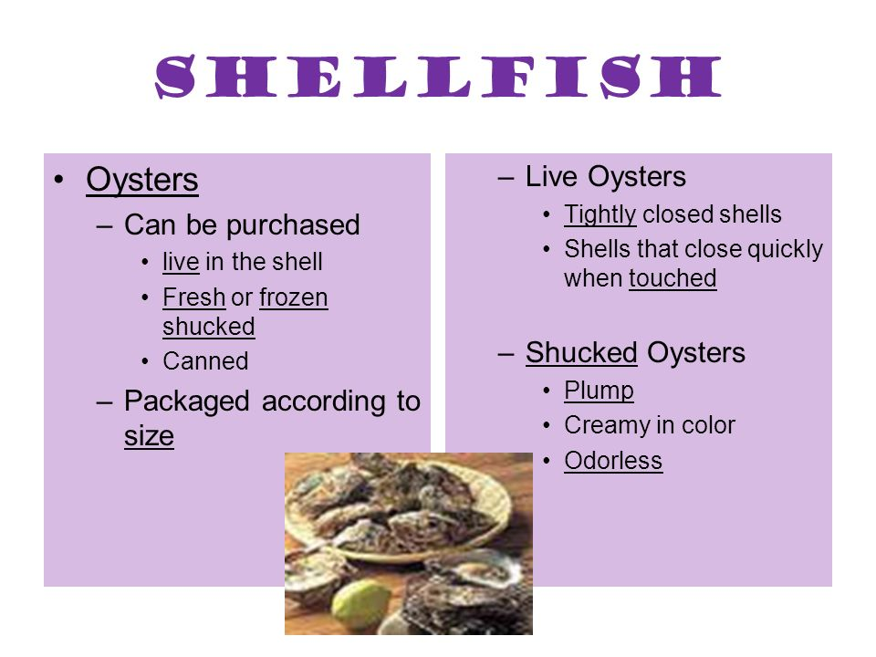Shellfish Oysters Live Oysters Can be purchased Shucked Oysters