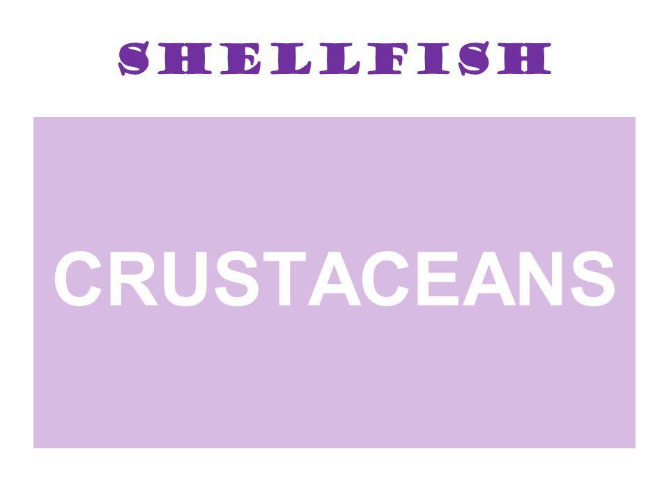 Shellfish CRUSTACEANS