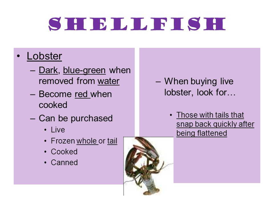 Shellfish Lobster Dark, blue-green when removed from water