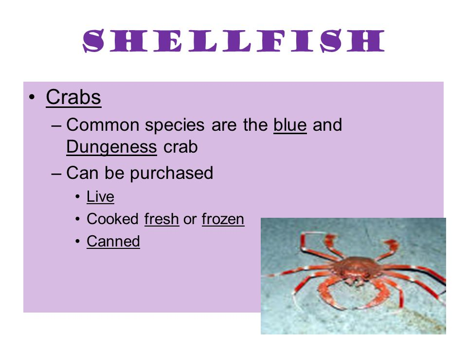 Shellfish Crabs Common species are the blue and Dungeness crab