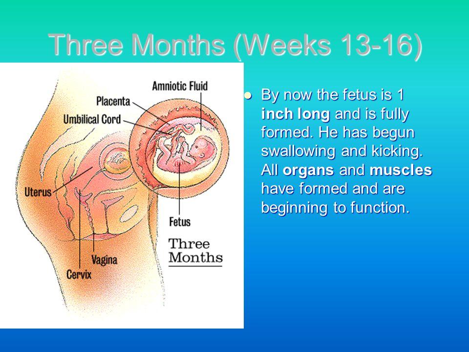 Three Months (Weeks 13-16)