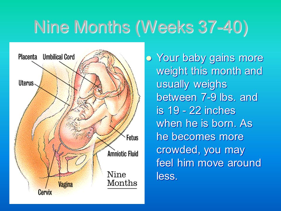 Nine Months (Weeks 37-40)
