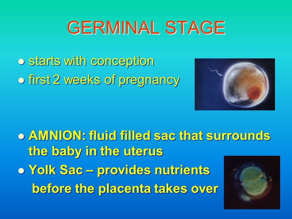 GERMINAL STAGE starts with conception first 2 weeks of pregnancy