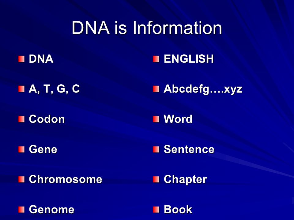 DNA is Information DNA A, T, G, C Codon Gene Chromosome Genome ENGLISH